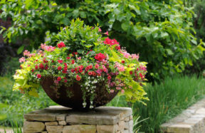 container gardening - Pots